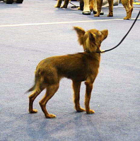Best in Show Puppy III